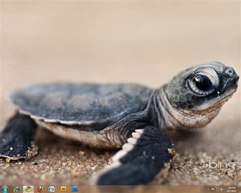baby sea turtle!   Mermaid Baby!   Pinterest