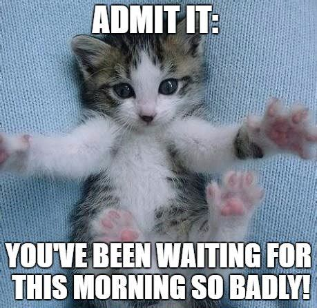 Cute Good Morning Meme - 20 adorable and cute good morning memes sayingimages com