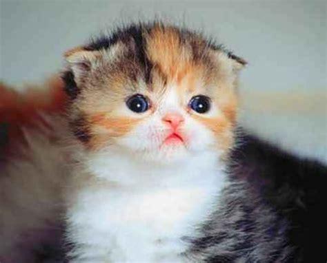 Gambar Foto Kucing Lucu 7 dp kucing lucu ngegemessin puzzle