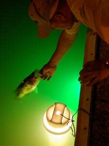 Floating Fishing Light by Coleman Watches Bass Pro Shops