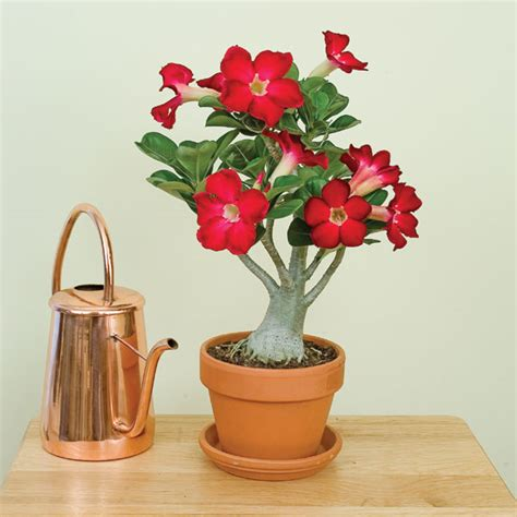 Pot Anggrek Minimalis desain pot bunga minimalis gambar rumah idaman
