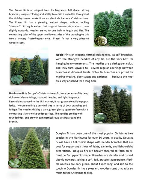fresh cut christmas trees christmas tree flocking kit 100