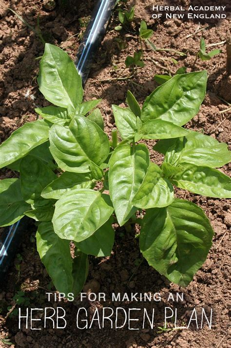 planning an herb garden nelsons herb s blog herbal academy 187 tips for making an herb garden plan