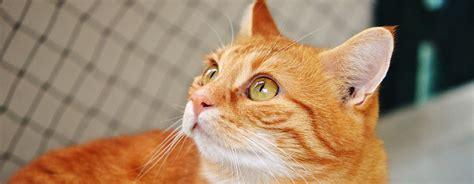 wann kitten impfen tierarzt katzen de