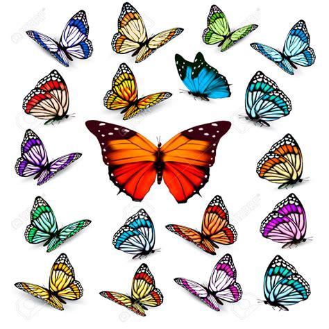 fiori e farfalle tatuaggi tatuaggi fiori e farfalle immagini e tatuaggi immagini