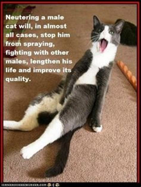 Cat Facts Meme - 1000 images about cat facts on pinterest cat facts