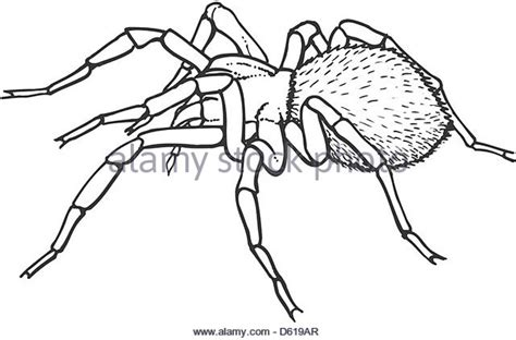 Spiderlie Ab goliath bird spider stock photos goliath bird spider stock images alamy