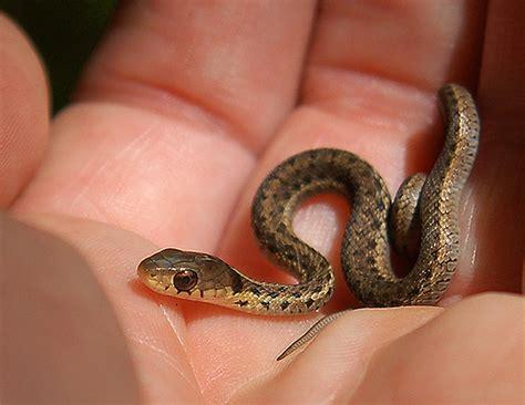 tiny tainy sssssnakes cute baby snakes baby animal zoo