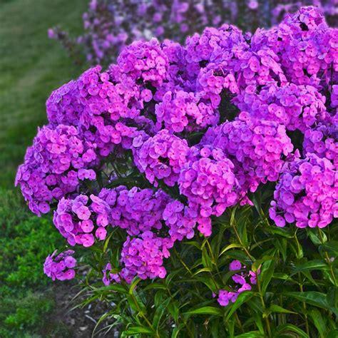 Superb Home Depot Garden Plants #6: 12556.Jpg