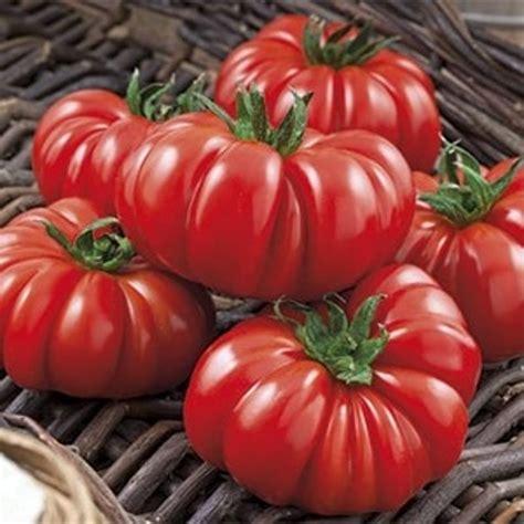 pomodori coltivati in vaso sugo al pomodoro ricetta