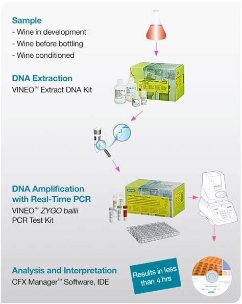 pcr test vineo zygo bailii pcr test kit food science bio rad