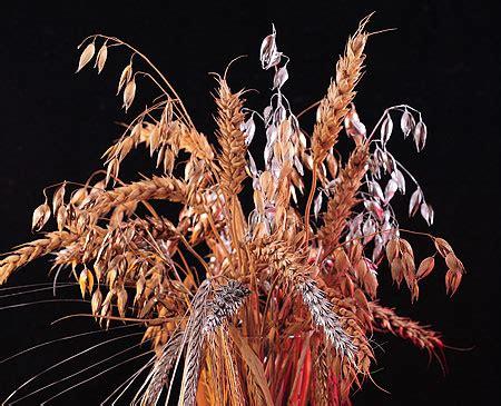 whole grains cholesterol whole grain foods regulate cholesterol level useful
