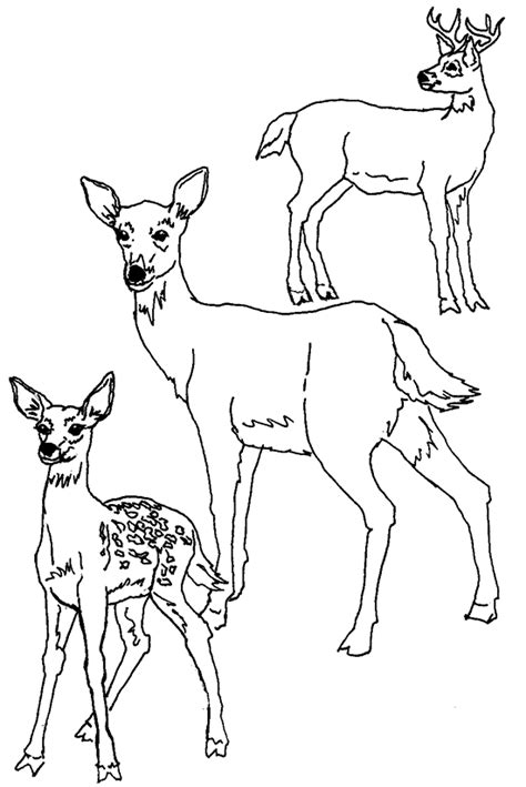 deer family coloring page mother and baby deer coloring pages bestappsforkids com