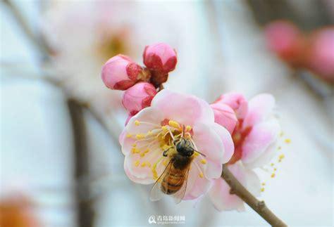 imagenes flores de invierno enciclopedia de la cultura china apreciaci 243 n de las