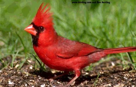 canadian birds wendy s journal
