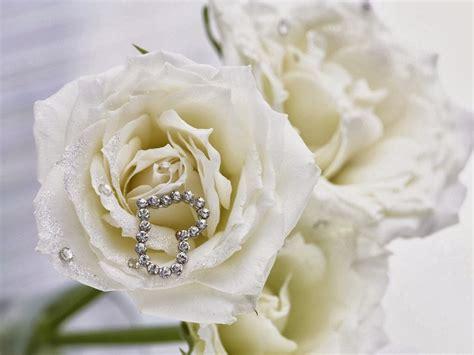 wallpaper bunga ros putih gambar bunga mawar 2 bliblinews com