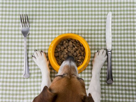 dog  eating    due  sensitive stomach petmd