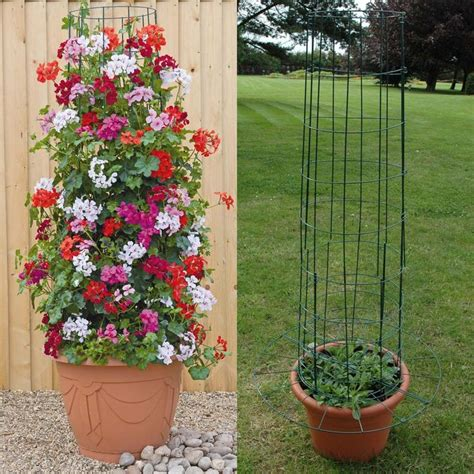 frame for climbing plants planting in large containers frame hanging baskets