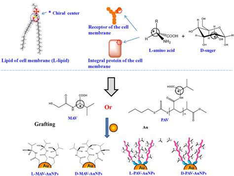 chiral nature  phospholipid  amino acid  sugar