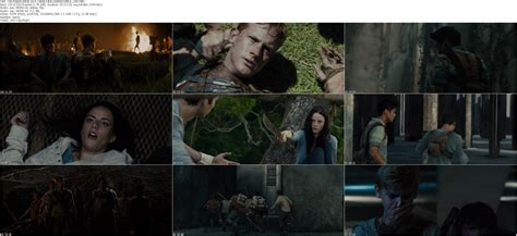 download film maze runner cinemaindo cinemaindo images card design and card template