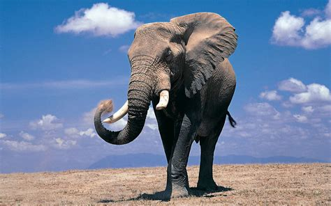 elephant wallpaper for laptop elephant wallpapers wallpaper cave