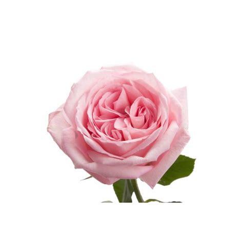 Garden Of Pink light pink garden o hara wedding flowers