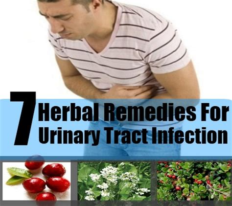 7 best herbal remedies for urinary tract infection