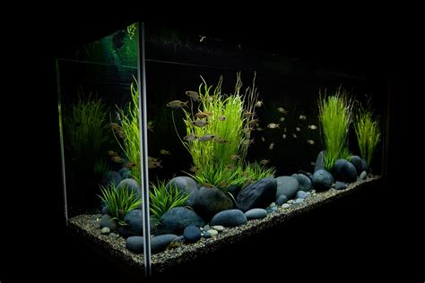 design vis aquarium transform the way your home looks using a fish tank