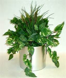 indoor house plant indoor plants to clean the air around you amy mac health fitness