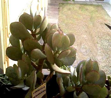 vendita piante grasse giardinaggio piante e fiori da giardino