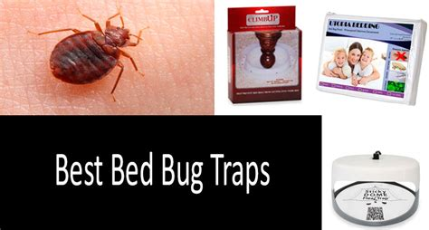 diy get rid of bed bugs how to get rid of bed bugs fast 8 best bed bug traps