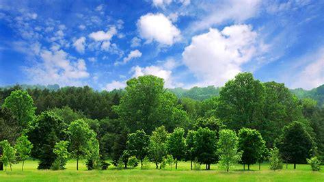 enterprise 50 million tree pledge saying thank you