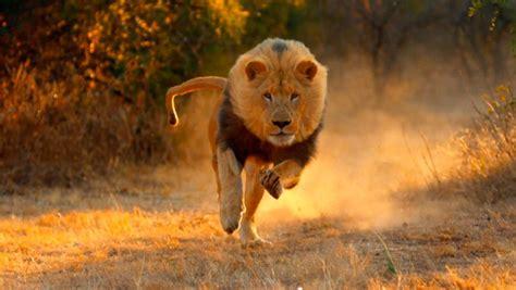 Imagenes De Animales Rapidos | los animales m 225 s r 225 pidos del mundo