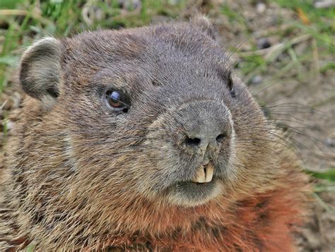 groundhog day groundhog groundhog day 2018 what is punxsutawney phil looking for