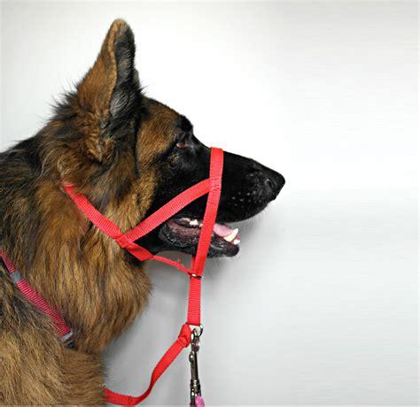 halti harness halti harness for dogs