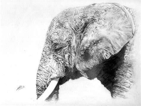 Tete Elephant Profil by C Novel Dessins 187 Animaux