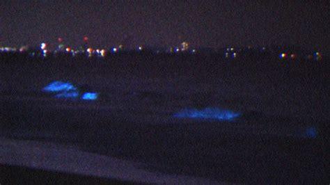 glow in the paint hong kong magnificent blue glow of hong kong seas also disturbing