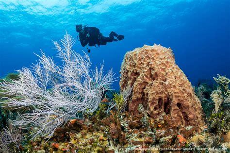 best underwater lensesunderwater photography guide canon 7d mark ii best settings for underwater underwater