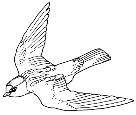 texas bird coloring page free washington state bird coloring pages