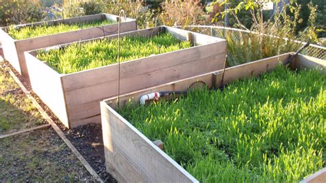 Best Cover Crop For Vegetable Garden Cover Crops For Gardens Growing Cover Crops In Your