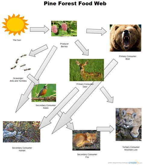 food web creator pine forest food web block diagram creately