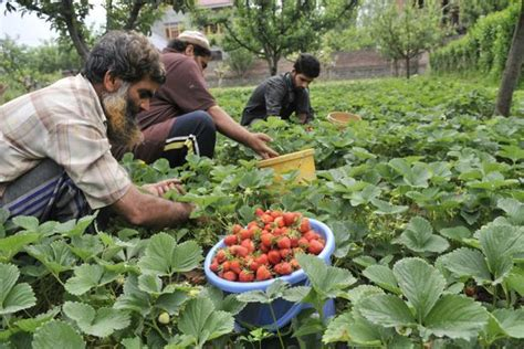 Backyard Growers Rajasthan Reinvents Agricultural Strategy By Promoting