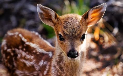 google images animals cute animals live wallpaper android apps on google play