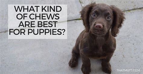 best chews for puppies what chews are best for puppies thatmutt a