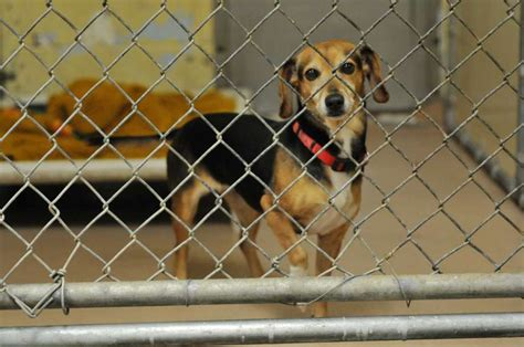 seattle humane dogs humane society has dogs to adopt from flooded sc
