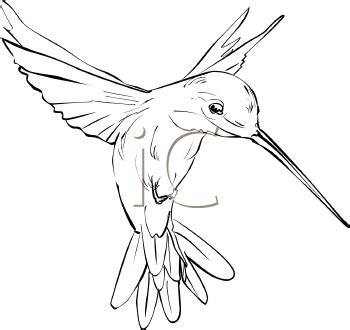 hummingbird art royalty free hummingbird clipart