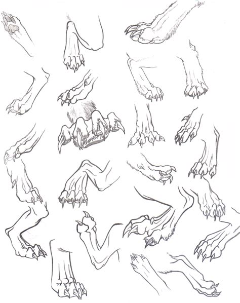 werewolf paw tutorial back paws reference dump by that one midget on deviantart