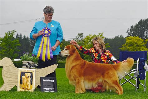 evergreen golden retrievers bis biss gch ch hill s run n amuck at abelard oa oaj axp ajp nfp wc vcx sdhf os