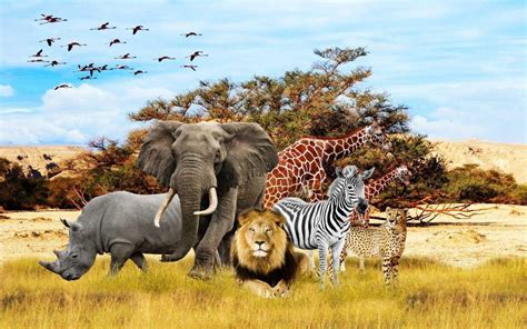 african animals wallpapers wallpaper cave