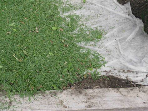 Landscape Fabric Grass Seed Front Range Food Gardener To Mulch Or Not